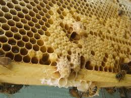 Futárral érkezik a méhpempő